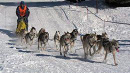 afbeelding-dog-race-als-metafoor-voor-de-mediamanager-en-mediamanagement